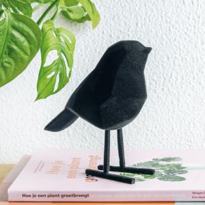 Sfeerfoto zwarte velvet vogel present time